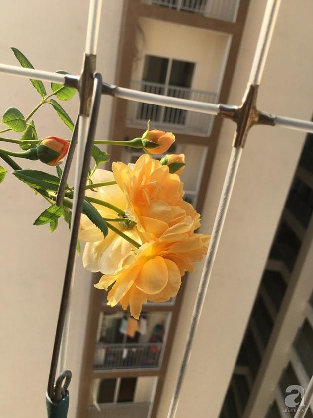 Ban công trồng đủ loại hoa hồng chỉ vỏn vẹn 6m2 13
