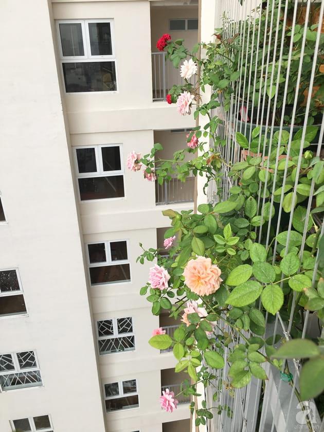 Ban công trồng đủ loại hoa hồng chỉ vỏn vẹn 6m2 28